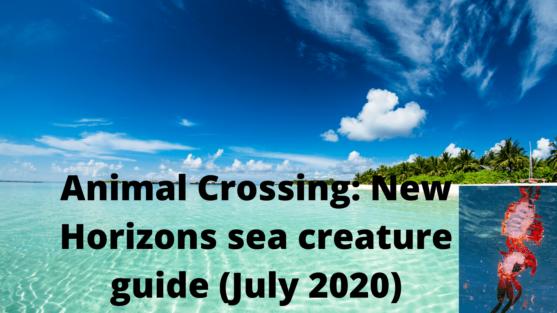 Animal Crossing: New Horizons sea creature guide (July 2020)